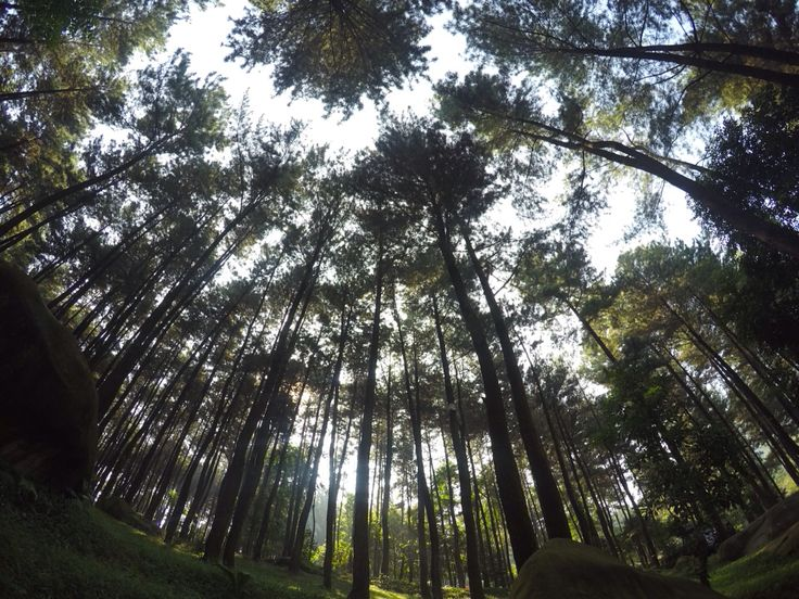 gunung pancar #visitindonesia #bogor