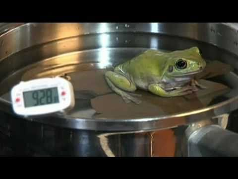 "The Old Tale of a Boiling Frog - Professor Douglas Melton says:  If you put a frog in boiling water, it won't jump out. It will die. If you put it in cold water, it will jump before it gets hot—they don't sit still for you. Victor H. Hutchison, Professor Emeritus of Zoology at the University of Oklahoma also said, ""The legend is entirely incorrect!"" It has not been shown to be true :P ( note the video uses a plastic frog) Moral: don't believe everything you see/read"
