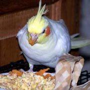 Hartz Bird Diet for Cockatiels, Lovebirds & Small Conures Bird Food, 5-lb bag