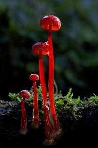 These things are the most interesting plants I know I think they're a type of mushroom I maybe wrong though
