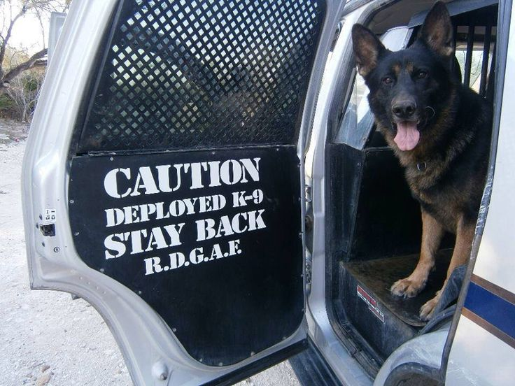 should police dogs be treated as Learn how you can help save a dogs life now  a louisiana state police officer who conducts dogfighting  why should animals have rights read more.