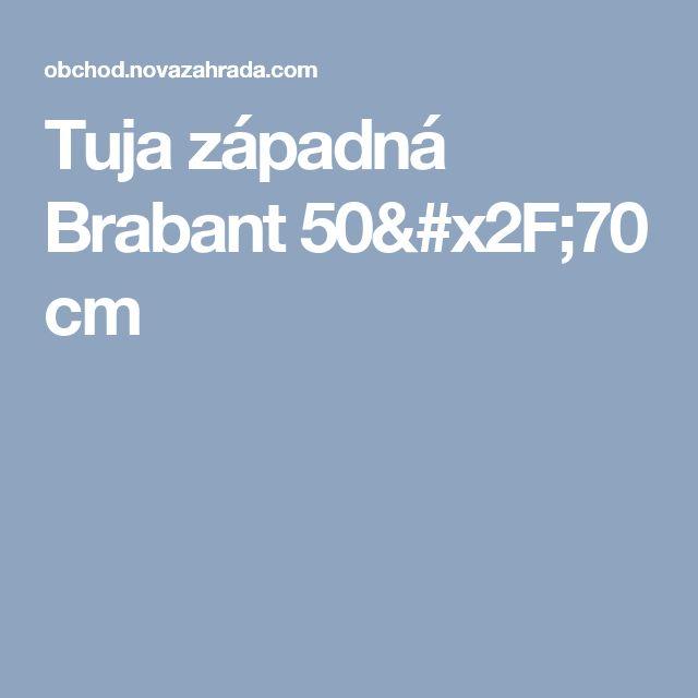 Tuja západná Brabant 50/70 cm