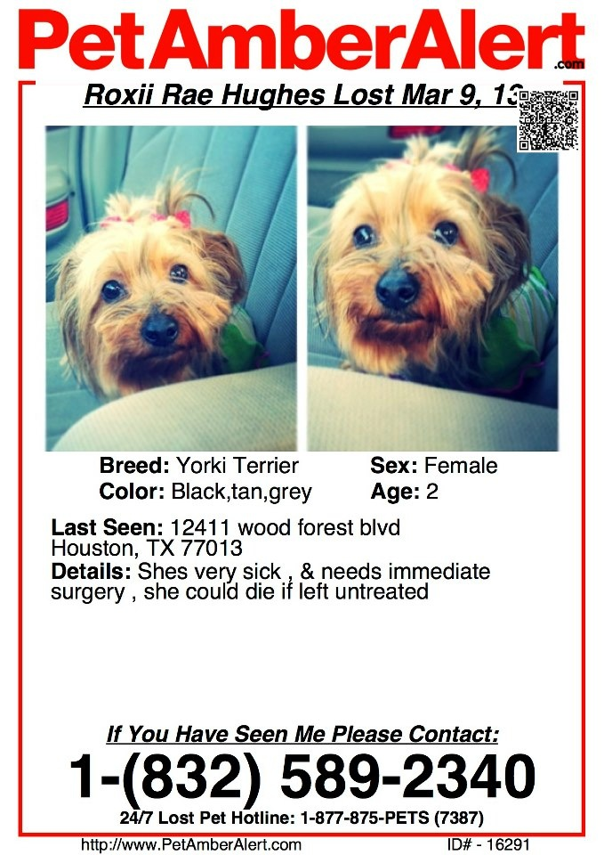 #MISSING ~~~~ #TEXAS ~~~~ #Lost #Pet #dog .... Lost #yorkie ROXII RAE HUGHES -- Last seen 3/9/13 -- female age 2 from 12411 Wood Forest Blvd #Houston 77013 sick needs surgery immediately or could die if left untreated Call 832 589 2340  @TexasLost Pets