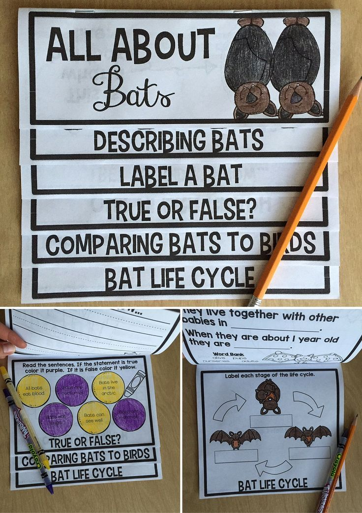 Adorable All About Bats book that is engaging and on target for science! Fun for students and easy for the teacher!