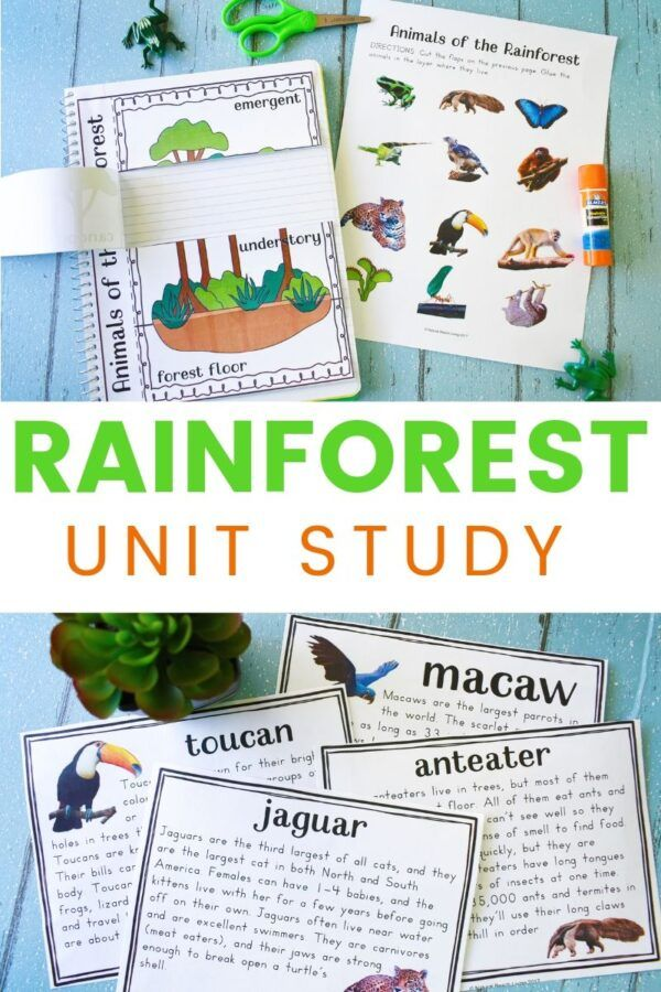The Best Rainforest Activities For Kids Rainforest Lesson Plans Printables Are Perfec Rainforest Activities Kids Learning Activities Rainforest Facts For Kids