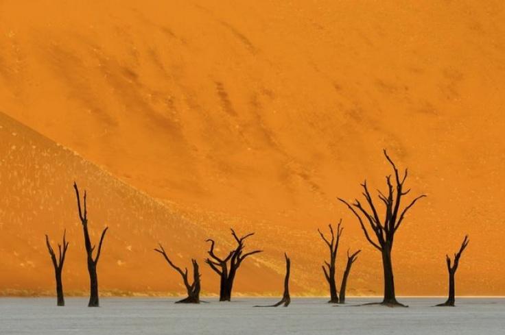 """Διεθνή Βραβεία Φωτογραφίας 2012: The Valley Of Death"""" , 1ο βραβείο στην κατηγορία Nature Finalist, από τον Marsel van Oosten"""