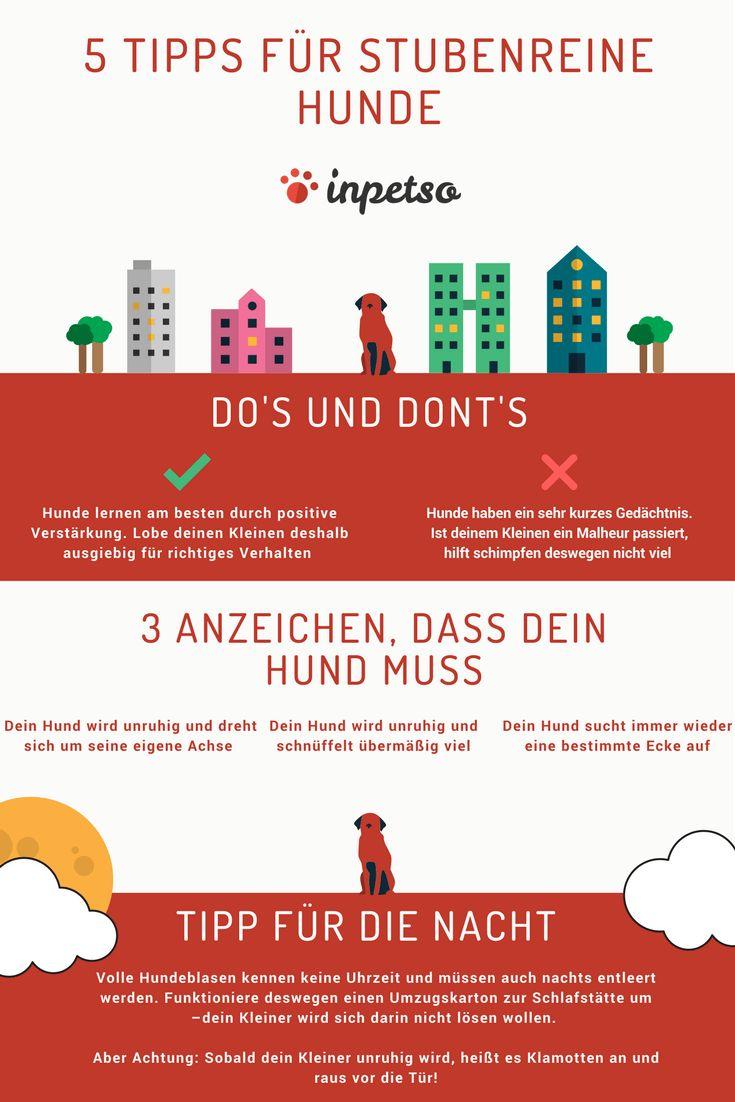 Infografik: So wird dein Hund stubenrein