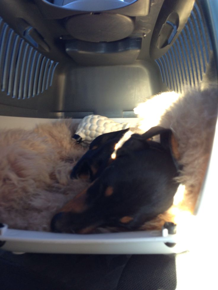Sleeping in the car...