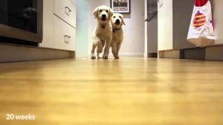pups-running-for-dinner-timelapse-style
