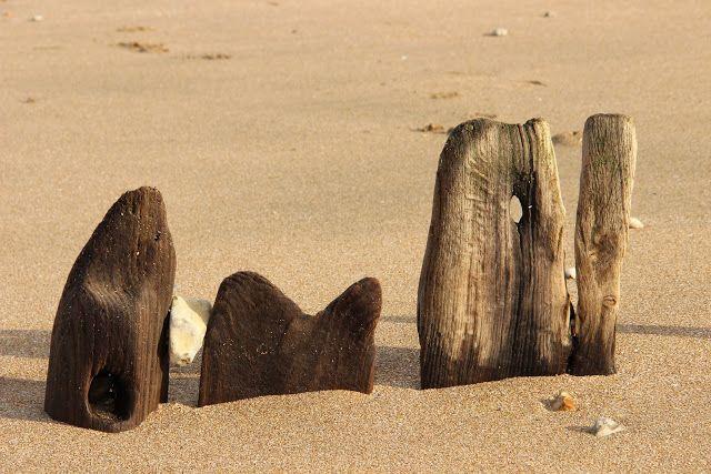 LA NORMANDIE EN PHOTOGRAPHIE: Les bois ensablés de Villers-sur-Mer - Pays d'Auge - Normandie