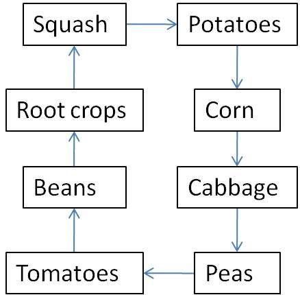 Proper crop rotation keeps soil full of nutrients, which keeps plants strong and productive. Unfortunately, many amateur farmers make the terrible mistake of not replenishing the soil after harvesting. This chart gives a good idea of what to plant from year to year. Of course, the vegetables that are grown have to be compatible with the location of the garden itself.