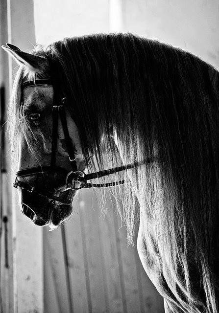 """rideforlifeorlove: """" Horse by ~Kiinzii """""""