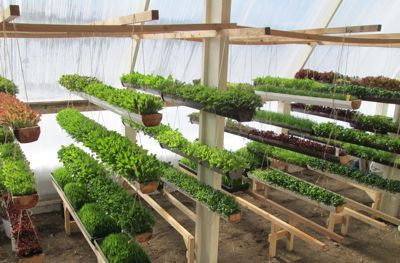 The Deep Winter Greenhouse At Paradox Farm Utilizes