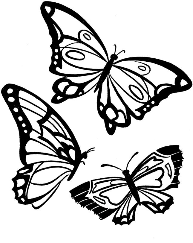 Three Butterflies Flying Coloring Pages For Kids Printable