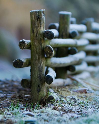 My mom lived on a farm way back in the country in upstate Pennsylvania in the early 1920's - she told me about this kind of fence and how she and her brothers made it.  How to make a wattle fence