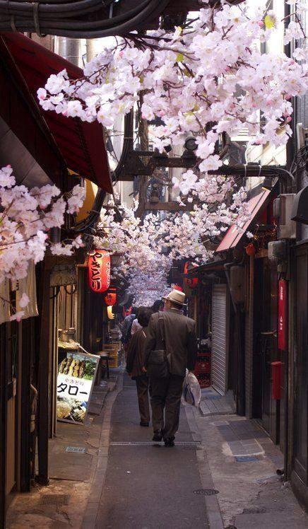Japan - Omoide Yokocho restaurant alley decorated with plastic cherry blossoms, Shinjuku, Tokyo