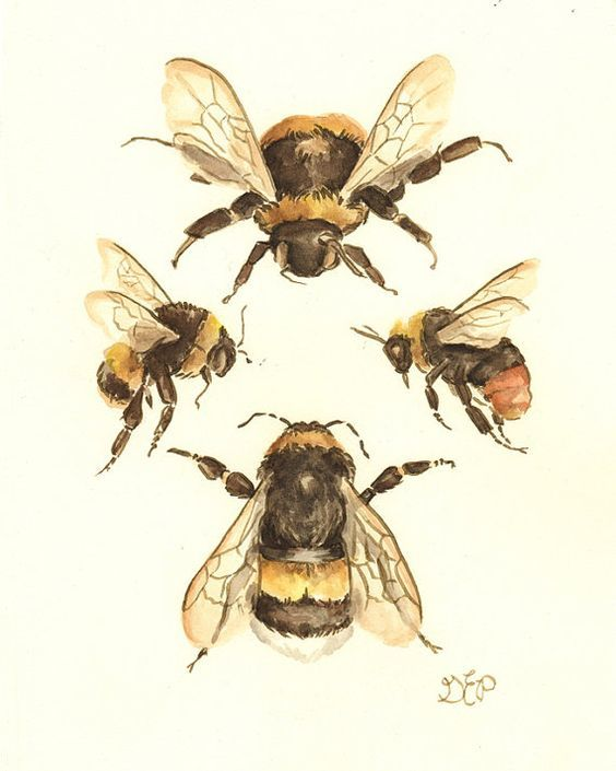 Image result for vintage bumblebee prints