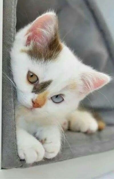 Adorable kitten with the most beautiful eyes
