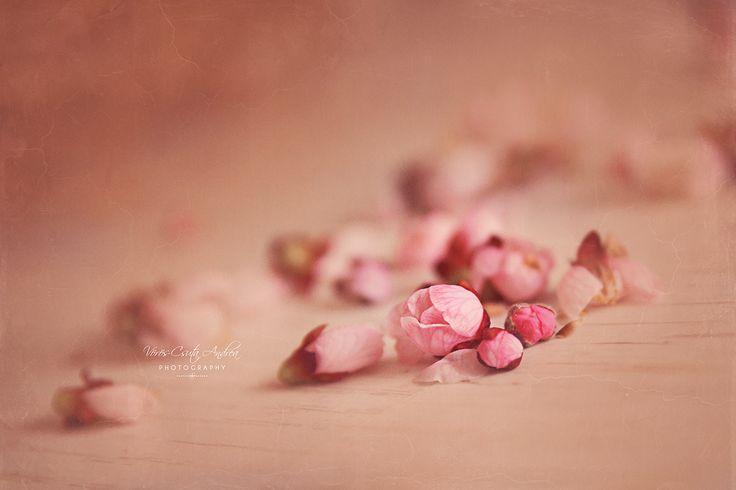 spring, flower, blossom, csutafoto, pink, burgeon