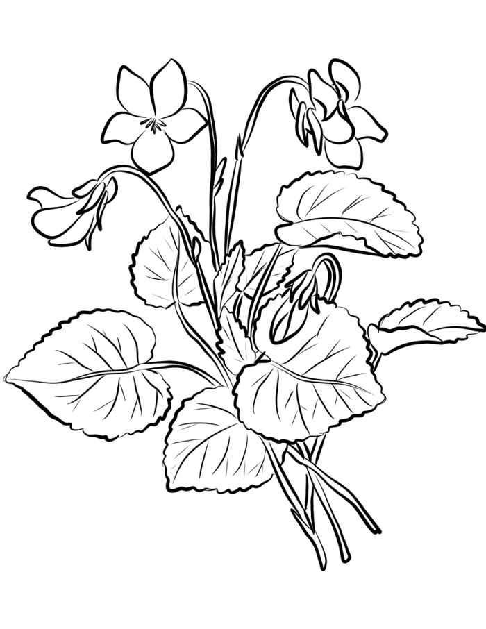Violet Flowers Coloring Pages