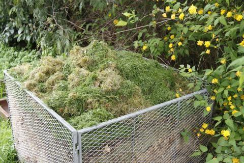 Rasenschnitt auf Kompost