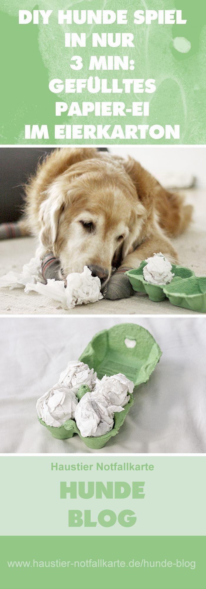 Juego de perros de bricolaje: huevos de papel relleno en cartón de huevos   – Tricktraining Hund