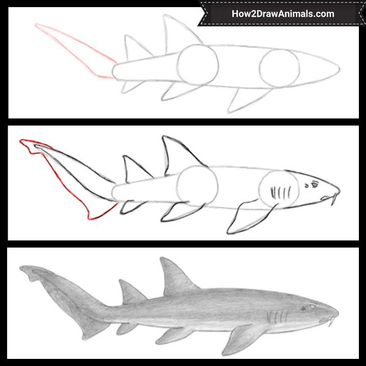 How To Draw A Nurse Shark Video Step By Step Pictures Nurse