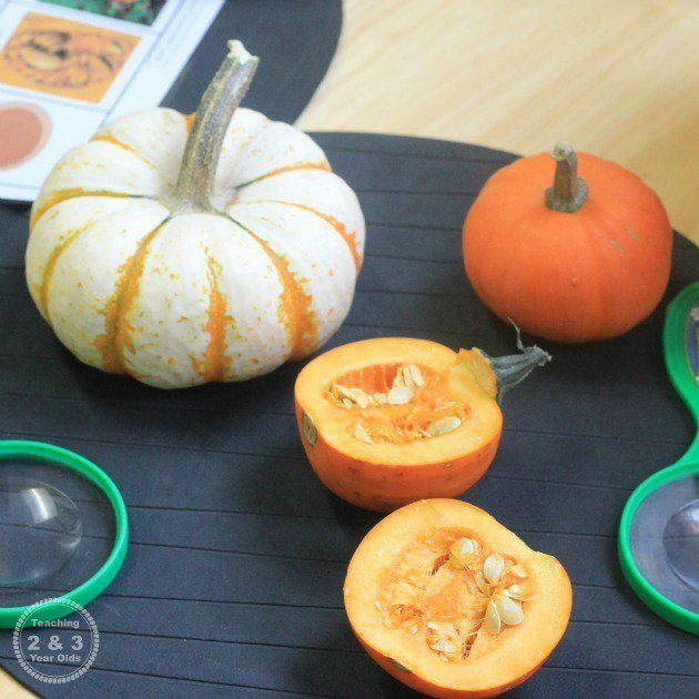 Preschool Science Ideas for Fall - Teaching 2 and 3 Year Olds