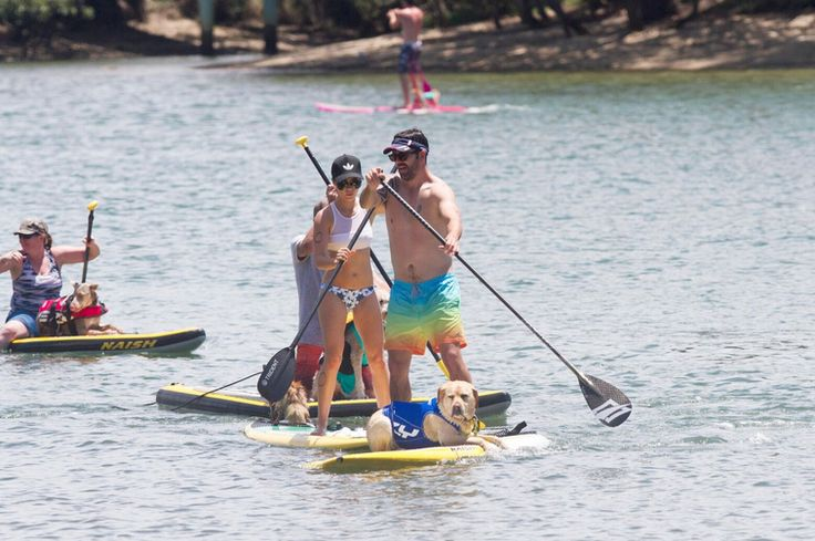 SUP Updates Hundreds of competitors show up to compete for cash and prizes Surfersvillage Global Surf News, 2 November, 2017 - Gold Coast, Queensland - Paddlers and dog lovers alike flocked to Currumbin RSL Reserve today for Surfing Queensland's inaugural 2017 Pups on SUPs event presented by EzyDog on the Gold Coast.