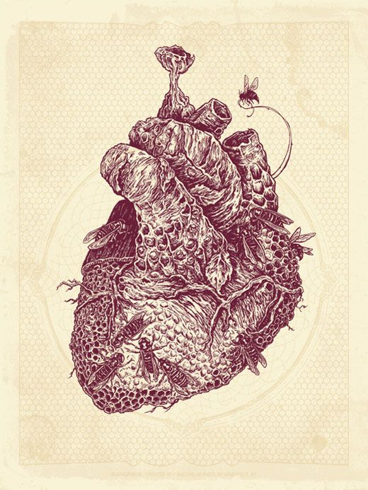 The hive heart by Justin Kamerer: Bees Hives, Illustration, Thighs Tattoo, Heart Art, Art Prints, Justin Kamer, Heart Tattoo, Beehive, Honeycombs Heart