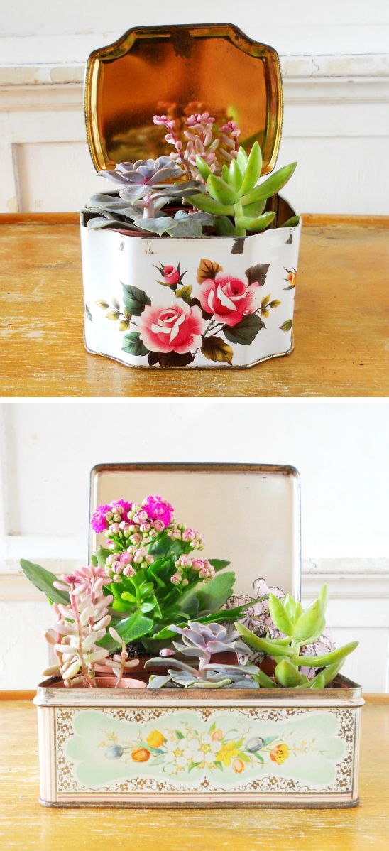 succulents in vintage tins DIY