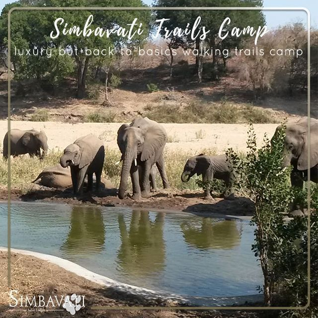 Simbavati Trails Camp is Simbavatis luxury-but-back-to-basics walking trails camp. Located in a secluded area of the Timbavati bordering an 11 000hs wilderness area in the Kruger National Park. . . . #Simbavati #Safari #SimbavatiTrailsCamp #New #Launch #Private #Getaway #Experience #Exclusive #Bush #Travel