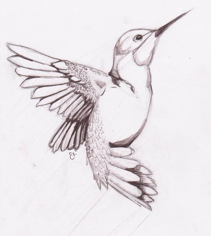 Humming Bird Sketch by ~chibikitty343 on deviantART
