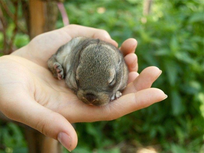 baby animals   Cutest Photos of Baby Animals in Hand-06