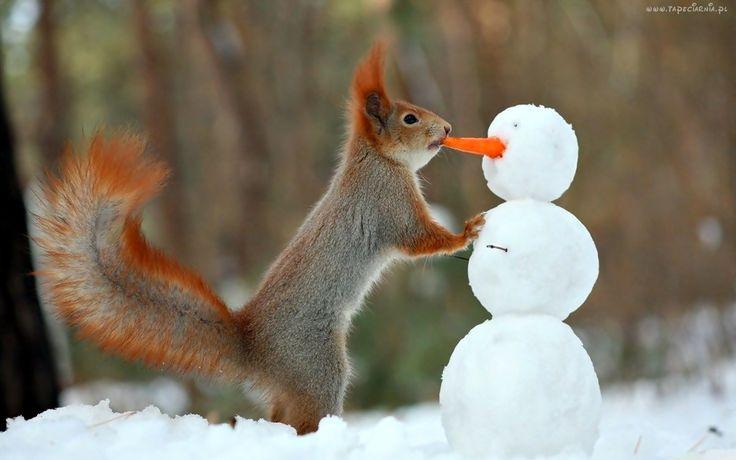 Zima, Śnieg, Bałwan, Wiewiórka
