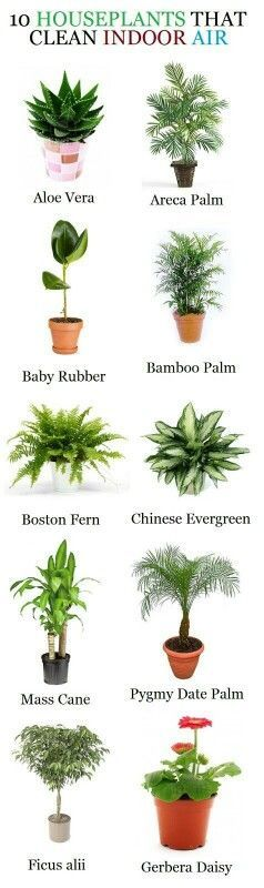 DIY Best Air Cleaning Plants for Home and Office. These indoor plants will help you to purify air and they are easy to grow at home and garden. #diy #garden #airpurifier