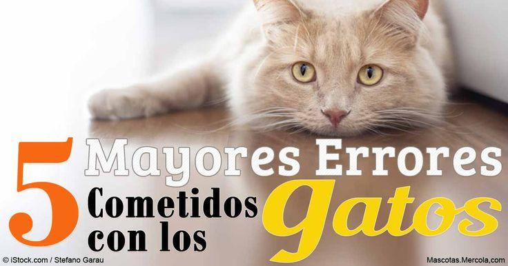 Incluso los dueños de gatos más amorosos y mejor intencionados pueden cometer errores. Aquí están los errores más comunes, y varios consejos para solucionarlos.