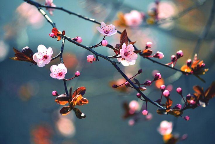 цветение деревьев: 20 тыс изображений найдено в Яндекс.Картинках