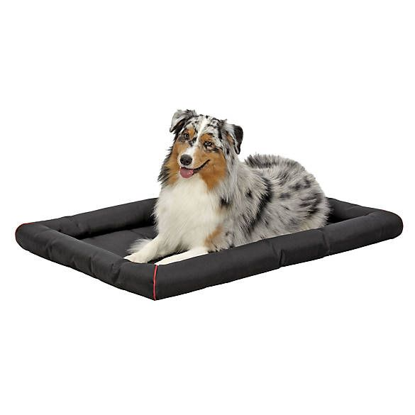 Best 25+ Kong dog bed ideas on Pinterest | Dog chew toys ...