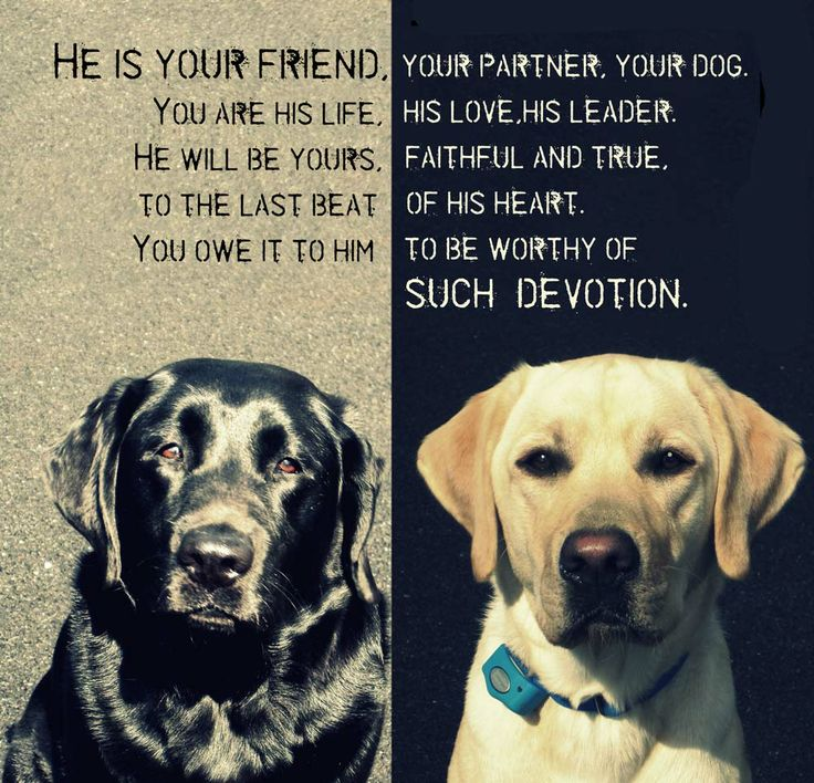 Quotes About A Girl And Her Dog 15 Best Dog Quotes Images On Pinterest  Best Friends Dog Quotes .