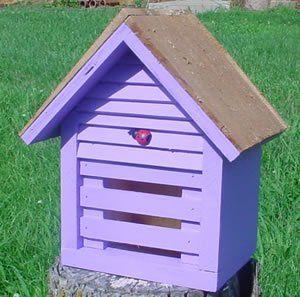 Homestead Ladybug House - Lavender
