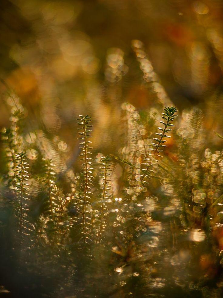 These beautiful Moments - Nämä kauniit hetket by Pauliina Kuikka