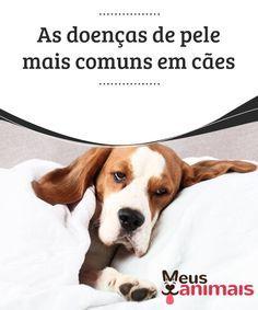 As doenças de pele mais comuns em cães Muitos donos admiram e cuidam da pelagem de seus cães, sem se darem conta de que a beleza dos pelos depende diretamente da saúde da pele.