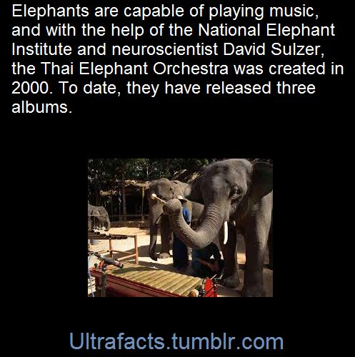 Ultrafacts.tumblr.com, Source Follow Ultrafacts for more facts