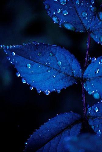 Gotas agua. Azul