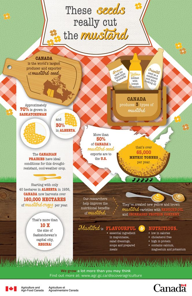 Canada is the world's largest producer and exporter of mustard seed. Approximately 70% is grown in Saskatchewan and 30% in Alberta. The Canadian prairies have ideal conditions for the drought-resistant, cool-weather crop.   Starting with only 40 hectares of mustard crops in Alberta in 1936, Canada now harvests over 160,000 hectares of mustard crops per year. That's more than 10 X the size of Saskatchewan's capital city, Regina!  Canada produces three mustard types:  -Yellow = mildest wit...