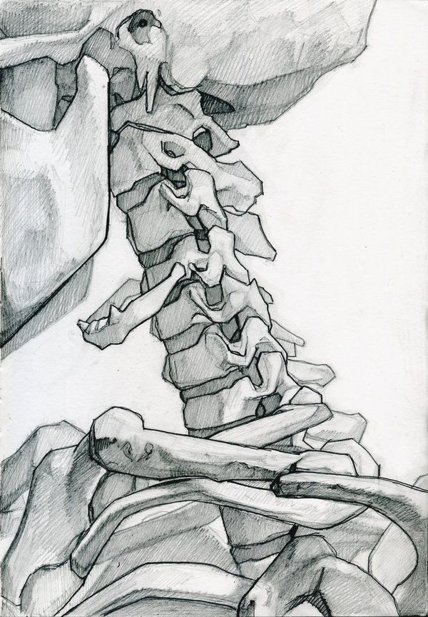 neck bones Let's Struggle Together, anatoref: Skeleton Studies by James Julier