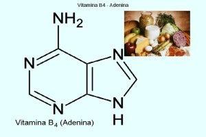 VITAMINA B4 - (ADENINA) - Athlete Training Tips