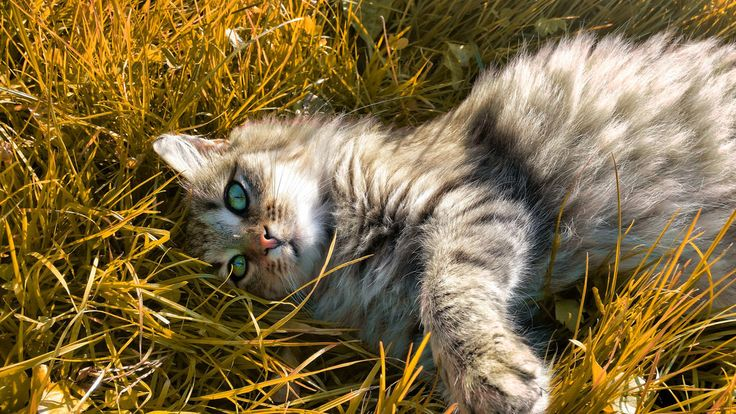This is one of my most favourite photos...P.S. the cat is mine and it's not on sale hahah #nature #cat #pet #animal #chill #chilling #grass #posing #croatia