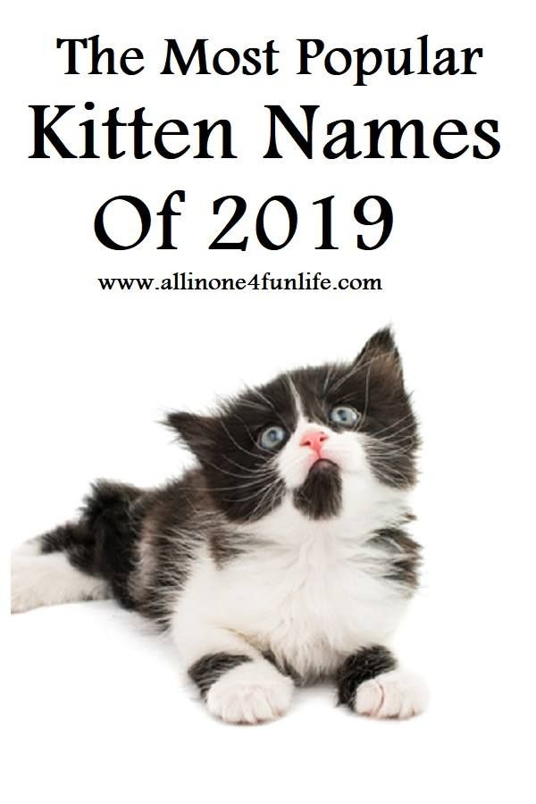 The Most Popular Kitten Names Of 2019 Kitten Names Female Cat Names Unique Girl Pet Names